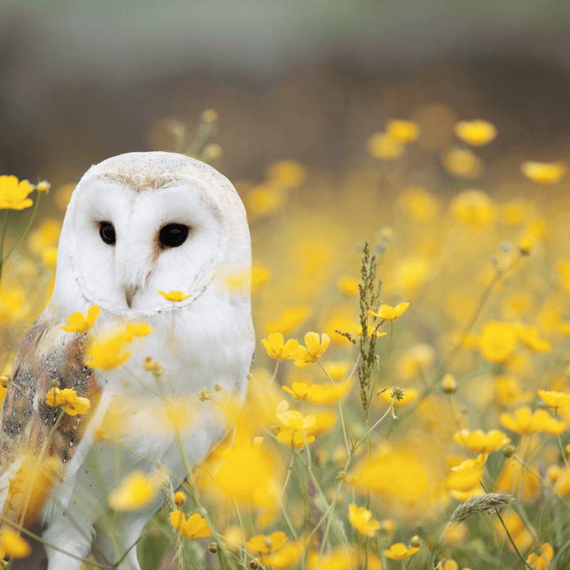 Biodiversity Image